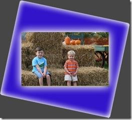 pumpkins patch 1