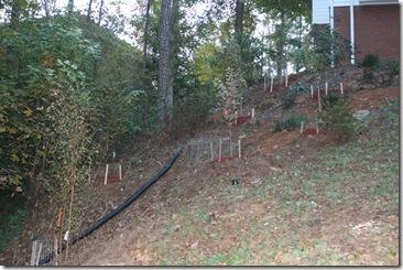 hillside landscaping 3